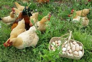 好山娃生态农业