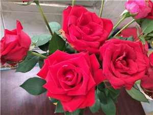 亚游玫瑰花园