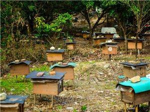 泸州夜郎谷土蜂养殖园