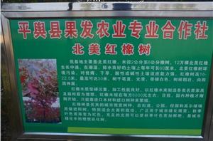 平舆果发农林合作社
