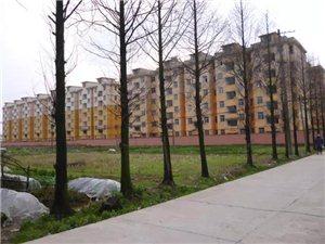 余江公租房公告,想申�公租房的都�砜纯葱枰�哪些�l件......