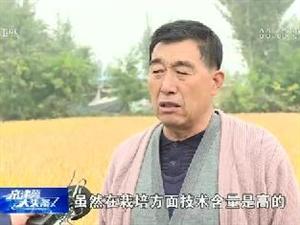 大头条:阜城旱地也能种水稻!袁隆平旱稻在古城镇李里阳村试种成功,亩产达450公斤