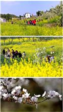 澳门威尼斯人网站最全赏花地图,闪亮你的眼睛!!(必收藏)