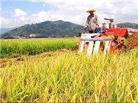云南印发沙漠蝗防控技术方案和监测预警方案