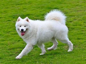泪目!狗狗被主人送到两百公里外,5个月后自己找回家
