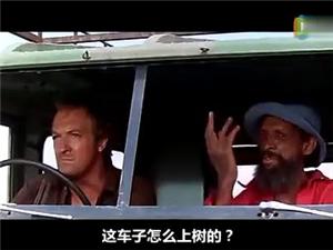车子怎么会上树呢?