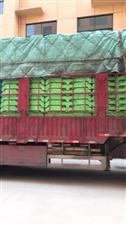 找货车拉货长期公司用