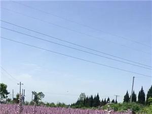 中国最美乡村宝鸡凤翔马村堡子大槐树村
