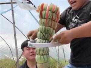 最完美的一次切西瓜真漂亮