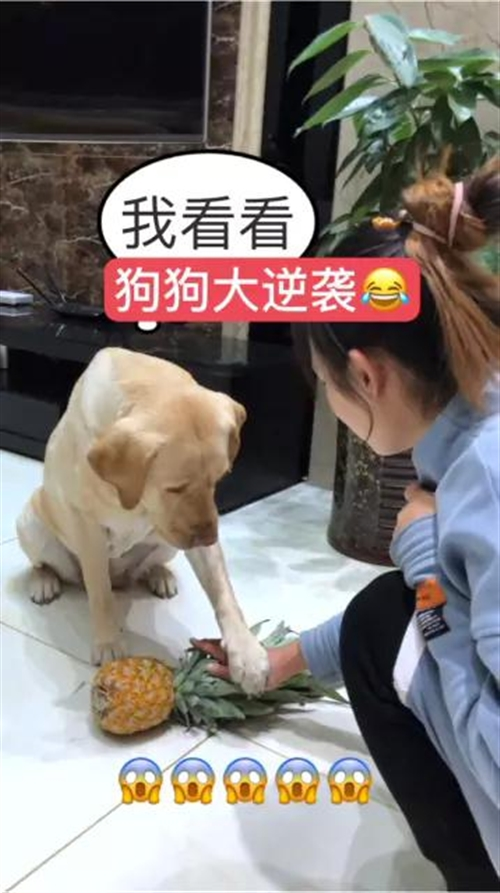 狗狗大逆袭