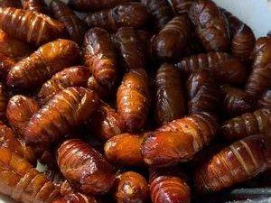 对于惧怕虫子的我居然最爱吃这个