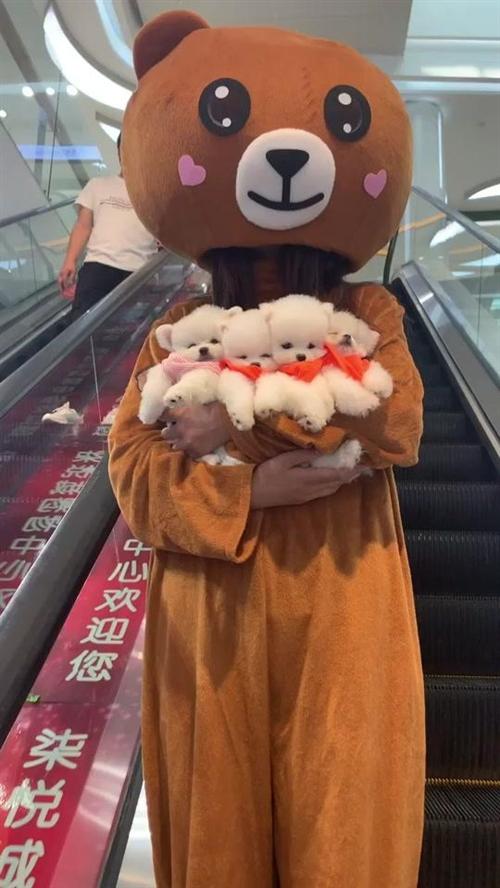 小哥哥你是在考验小熊的不会追你吗……????#魔性抖jio舞#萌宠