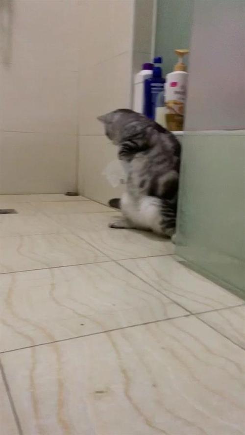 对不起了叮当??#猫