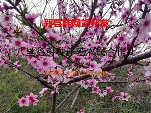 04新县味网货开发