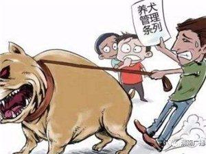 11携带犬只户外活动违规