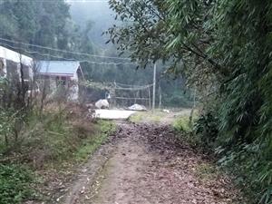 乡村道路硬化