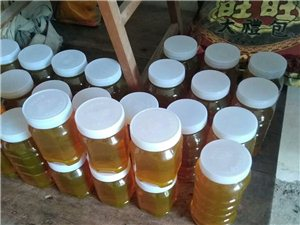 蜂农王姐的养蜂生活剪影