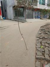 新居村电线庄低矮,导致电线低经常被打车拉断