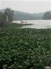 龙川县佗城镇一带的河中电鱼船就没人管了???