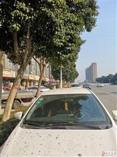 湘江路东段绿化树掉带颜色的果实,车子停在树下遭了殃