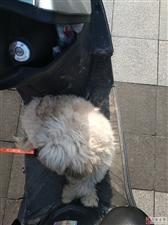 寻找粗心的狗主人