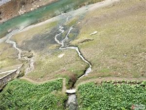 大河排污管直接联通河道