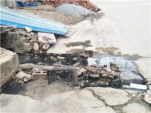 街道排污管严重堵塞污水路面排