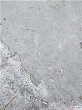 邹城市太平镇中行村怎会有这么多的虫子