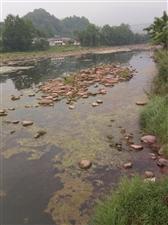 这还是川溪河吗?