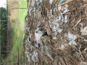 绿水青山在唐村是垃圾成山