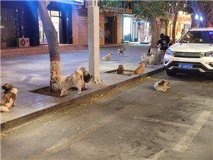 野狗成群结队出现闹市,无人问津。
