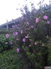 异乡的花开的如此漂亮