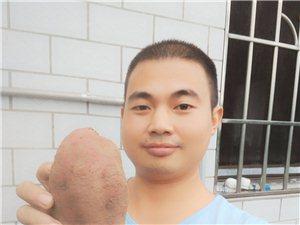 红薯大甩卖