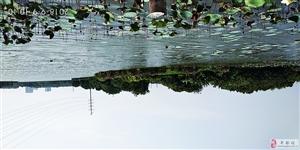 丰都县保合镇生态园