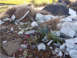 这是和凤孙家巷原村委会垃圾处理现几个月无人管臭难闻