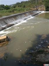河岭河段出现大量死鱼!排污还是有人毒鱼,望有关部门重视!
