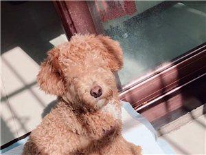 寻狗启示,9月3号下午在台湾城红绿灯附近丢失,有很深的感情,大家看到请帮忙扩散一下,谢谢