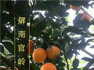 新京葡棋牌高山脐橙