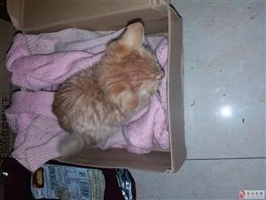 宠物 这是榕山谁家养的小猫跑掉了?