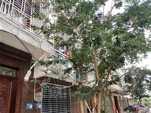 街道居民电线乱搭乱吊……掉下相关部门无人管理……居民生命财产没有保障!