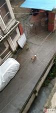 谁家狗狗丢了么