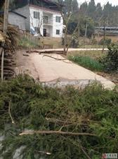 希望有关部门管管。方家镇武通村4组的村道,被人拦截