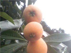 吃最新鲜的水果
