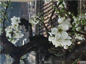 趁阳光正好,盗赏花之名,共赴一场初见……