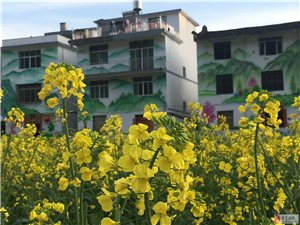 赏油菜花,看超大壁画,快来代溪长宦村