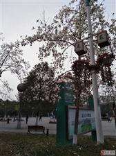 早步五柳公园有感