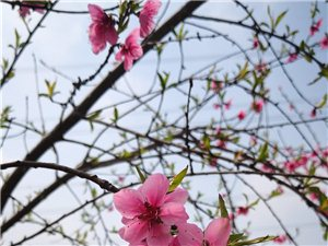 幸福七里,在那桃花盛开的地方