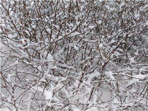 春分――雪