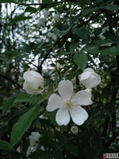 飞泉山的野花开了
