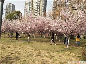 春天宜昌多美丽,游客接踵盼归来!